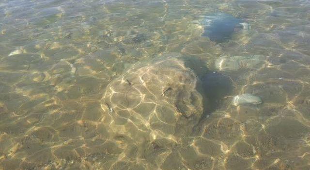 SEGNALAZIONE. Resti di cemento e ferro nel mare di Eraclea Minoa nella prima spiaggia