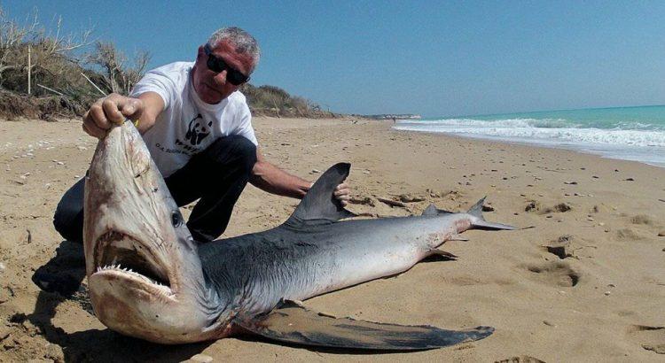 Dott. Domenico Macaluso, Responsabile Scientifico WWF Sicilia sul ritrovamento dello squalo a Borgo Bonsignore