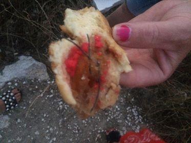 SEGNALAZIONE. Pezzi di pane con veleno e  fil di ferro per uccidere i cani