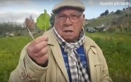Ecco come riconoscere le erbe spontanee commestibili e officinali