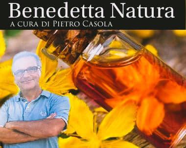 VIDEO. L'oleolito di Iperico e le sue proprietà. A cura di Pietro Casola